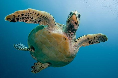 turtle-2250720_1280